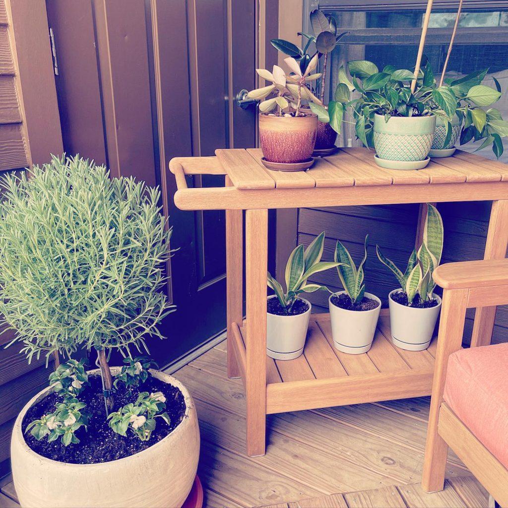 New plants & plant baby upgrades